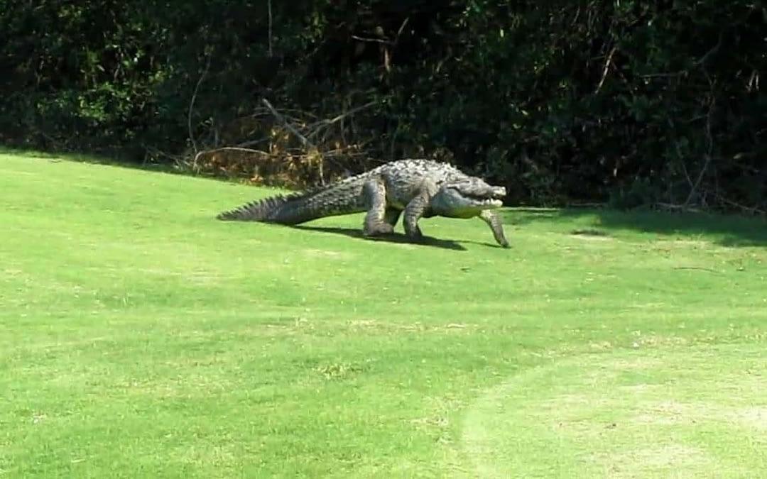Vallarta: About Crocs